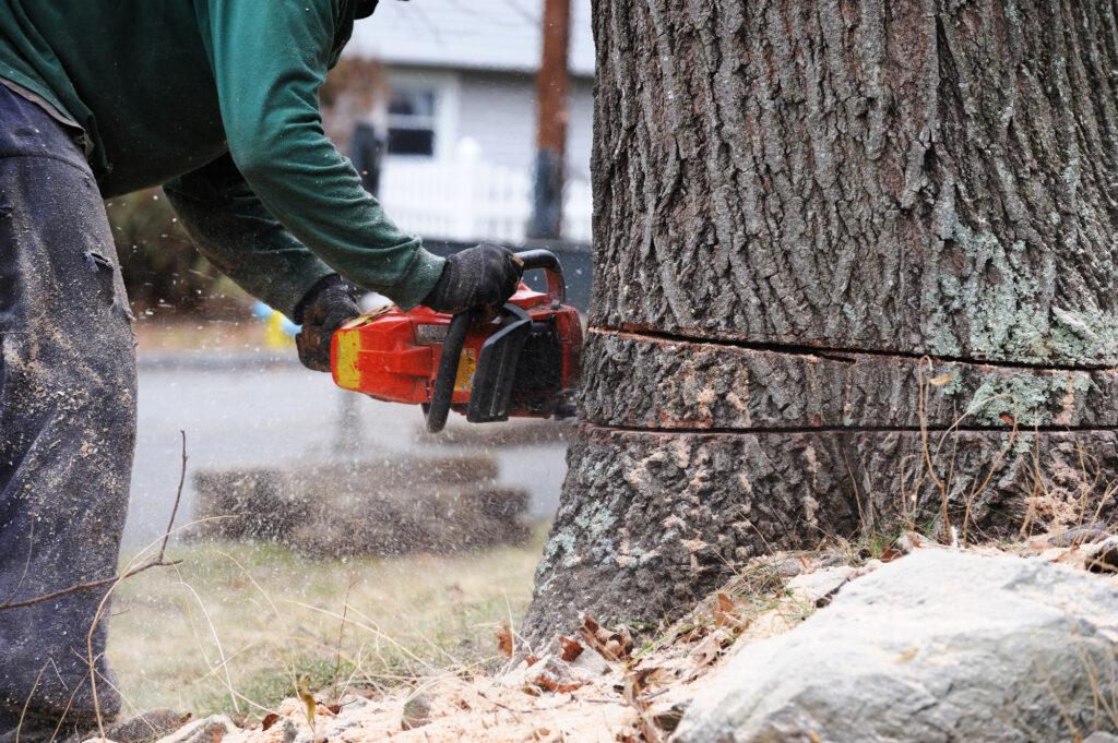 Tree removal Long Island